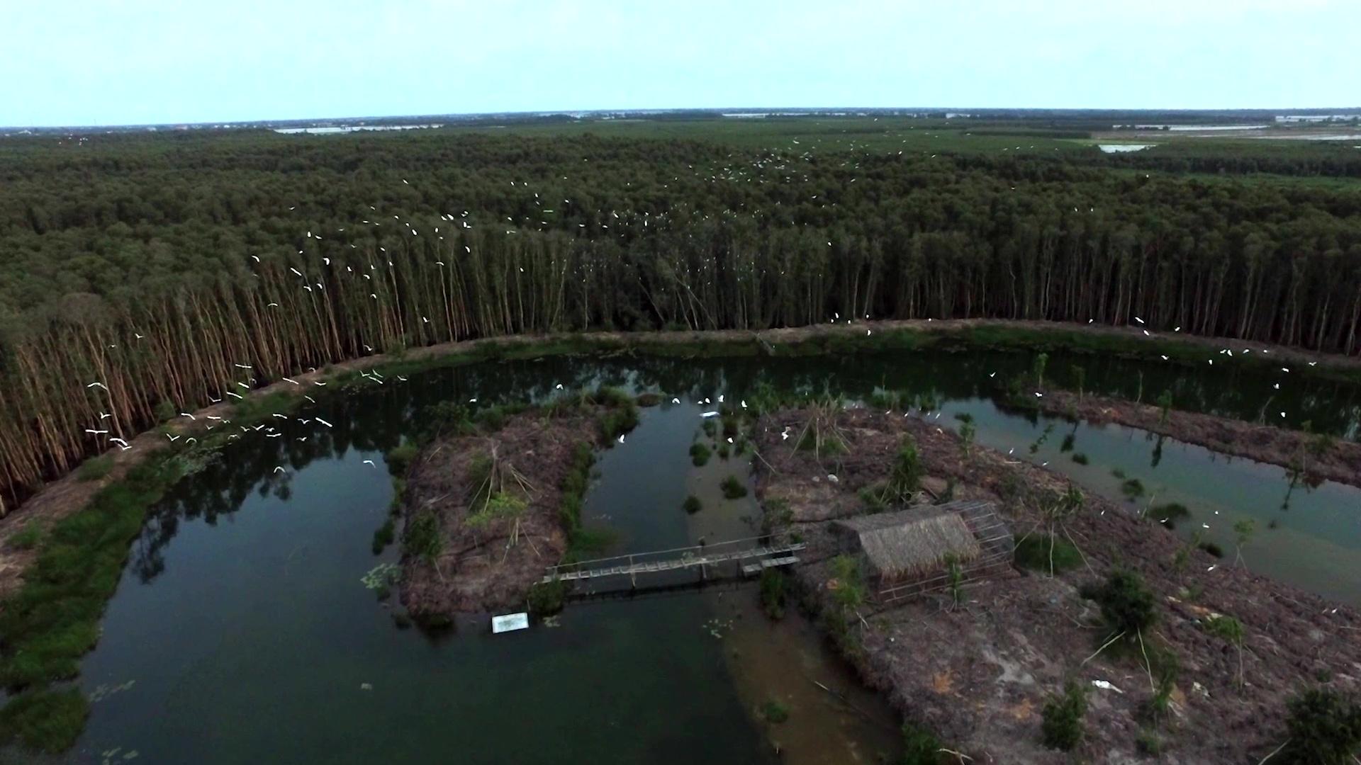 Đảo Thuần Dưỡng Chim ( chi tiết )